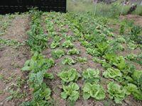 Agroproduvet  Tecnologia